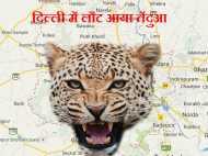 सावधान! दिल्ली में लौट आया तेंदुआ, खौफ में जी रहे हैं लोग