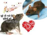 स्टडी- चूहे भी गाना गाकर चुहिया को अपनी ओर आकर्षित करते हैं