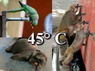 Hot Pics @ 45°C: जब बेहाल हुए जानवर