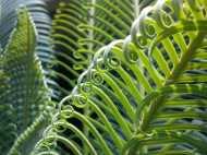 उत्तर प्रदेश में तैयार हो रहे दुर्लभ प्रजाति के पौधे