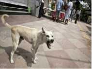 आवारा कुत्तों ने खाया पोस्टमार्टम के लिए रखा महिला पर्यटक का शव