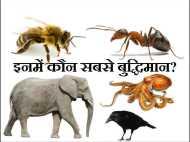 दुनिया के 10 सबसे बुद्धिमान जानवरों की सूची