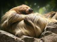 PICS: जानवरों की ये 20 तस्वीरें देख कर चौंक जायेंगे आप