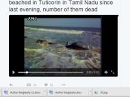 Video:100 से ज्यादा व्हेल मछलियां तमिलनाडु के समुद्रतट पर