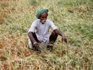 यूपी के किसानों के लिए खुशखबरी, फसल खराब होने पर मिलेगा मुआवजा