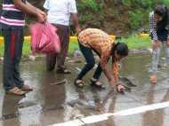 OMG! मुंबई-पुणे एक्सप्रेसवे पर हुई मछलियों की बारिश