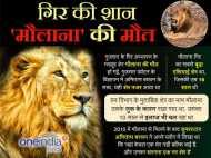 'खुशबू गुजरात की' विज्ञापन में अमिताभ के को-स्टार मौलाना शेर की मौत
