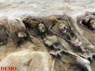 मोसूल के पास मिली 100 लाशों की सामूहिक कब्र
