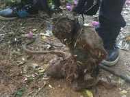 मेडिकल छात्रों ने किया मानवता को शर्मसार, बंदर को क्रूरता से मार डाला