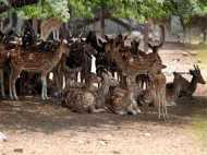 दिल्ली के चिड़ियाघर में ही नहीं सुरक्षित हैं जानवर! दी जा रही एक्सपायर्ड दवाएं