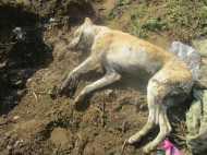 पालतू कुत्ते से लड़ाई पर गली के कुत्ते को पीट-पीट कर मार डाला, 1 गिरफ्तार