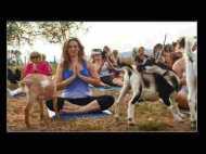 फेमस हो रहा है 'गोट-योगा', बकरियों के साथ योग करने के लिए लगीहै लंबी कतार