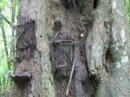 OMG! यहां पेड़ के अंदर दफना दिए जाते हैं बच्चों के शव