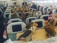 VIDEO: ऐसा भी एक शौक, पालतू बाजों को कराई हवाई यात्रा