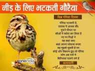 विश्व गौरैया दिवस: एक घर 300 घोंसले और सैकड़ों चिड़ियों का डेरा
