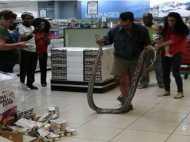 सुपरमार्केट में दही के लिए महिला ने खोला फ्रीज, मिला 12 फीट लंबा अजगर