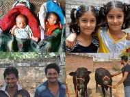 भारत का ऐसा गांव जहां बच्चे ही नहीं भैंस भी जुड़वा पैदा होती हैं, तस्वीरें
