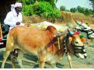 क्या खूब है एक आम किसान के देखभाल की यह मिसाल
