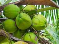 नारियल पानी पीने वाले सावधान: बोतल से निकली ऐसी चीज कि देखकर निकल गई चीख