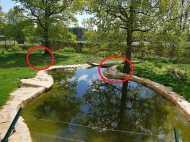 चैलेंज: इस तस्वीर में छुपे हैं दो बाघ, खोजकर दिखाओ तो माने