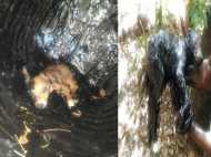 Video: कुत्ते के बच्चे को तारकोल के ड्रम में फेंका, 24 घंटे तक फंसा रहा किसी ने नहीं की मदद