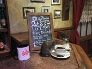 OMG: यहां खुला चूहों के लिए कैफे, गरमा-गरम कॉफी के साथ करें दोस्ती