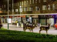 रहस्य: आधी रात न जाने कहां से लंदन की सड़कों में आ जाता है हिरणों का झुंड, जानिए पूरी घटना