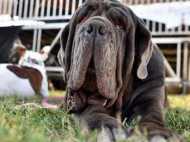 सोशल मीडिया पर क्यों मशहूर हुआ यह कुत्ता, जानिए वजह