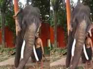 हाथी और महावत के बीच ये Kiss वाला प्यार देखकर दंग रह जाएंगे आप