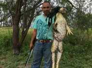 Viral:शिकारी के हाथ लगा इंसान के कद का मेंढक