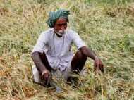 कैराना उपचुनाव: जिन्ना नहीं गन्ना है कैराना के किसानों का अहम मुद्दा,  योगी सरकार को याद दिलाया चुनावी वायदा