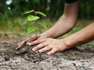 एक दिन में लगाए गए 66 मिलियन पौधे, टूटा विश्व रिकॉर्ड