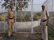इस VIP पेड़ की सुरक्षा में हर साल 12 लाख खर्च करती है मध्य प्रदेश सरकार