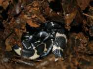 100 दिन तक किंग कोबरा के अंडों की सुरक्षा करते रहे ये तीन लोग, लेकिन क्यों?