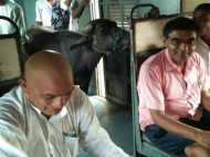 PIC: बिहार में लोकल ट्रेन की भैंस भी करतीं हैं सवारी, तस्वीर बता रही है कहानी...