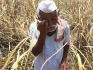 बेहोश होकर गिर पड़े महाराष्ट्र के किसान, छिड़काव के लिए खरीदी दवाई ने की हालत खराब