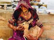 राजस्थान: मानवता की अद्भुत मिसाल है बिश्नोई समाज, वायरल होती इस तस्वीर से दुनिया हैरान