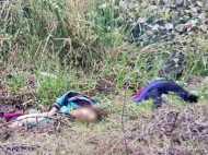 बिहार: छोटे भाई को बचाने आई दो सगी बहनों की करंट लगने से दर्दनाक मौत, सहेली भी नहीं बची