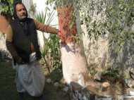 मंदिर से चोरी हो गया 8 फुट का खुशबूदार खजाना, कोहरे का फायदा उठा ले गए चोर