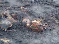 झोपड़ी में लगी आग, 50 बकरियों सहित 13 वर्षीय किशोरी की जलकर मौत