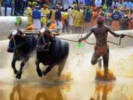 कर्नाटक में होने वाली कंबाला रेस पर अंतरिम रोक लगाने से SC का इनकार