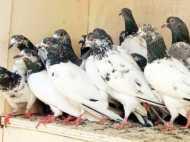 कबूतर पकड़ते समय बीच में आया मासूम, तो खेत में ले जाकर मार डाला