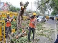 दिल्ली में 16500 पेड़ काटे जाने पर हाईकोर्ट ने लगाई रोक, 4 जुलाई को अगली सुनवाई