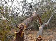 NGT ने दिल्ली में पेड़ों की कटाई पर 19 जुलाई तक लगाई रोक