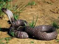 Snakes in Dream: क्या हो जब सपने में दिखाई दे जाए सांप