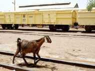मुंबई: स्टेशन पर बिना टिकट पकड़ी गई बकरी को रेलवे ने 2500 रु में किया नीलाम