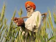 मोदी सरकार ने किसानों को दिया बड़ा तोहफा, गेहूं सहित 6 रबी फसलों का MSP बढ़ाया
