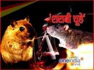 इस राज्य में चूहों को ऐसी लगी लत, गटक गए 10 हजार रुपए की शराब