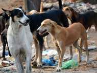 बिहार: ऑपरेशन थियेटर से मरीज के कटा पैर लेकर भाग गया आवारा कुत्ता