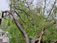 तमिलनाडु पहुंचा 'गाजा', भारी बारिश से काफी नुकसान, सरकार ने जारी किए Helpline Numbers